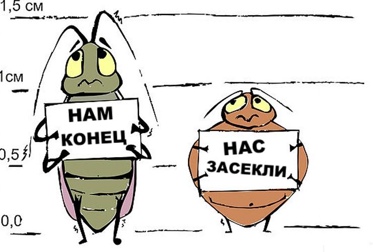 Тараканы сдаются дезинфектору