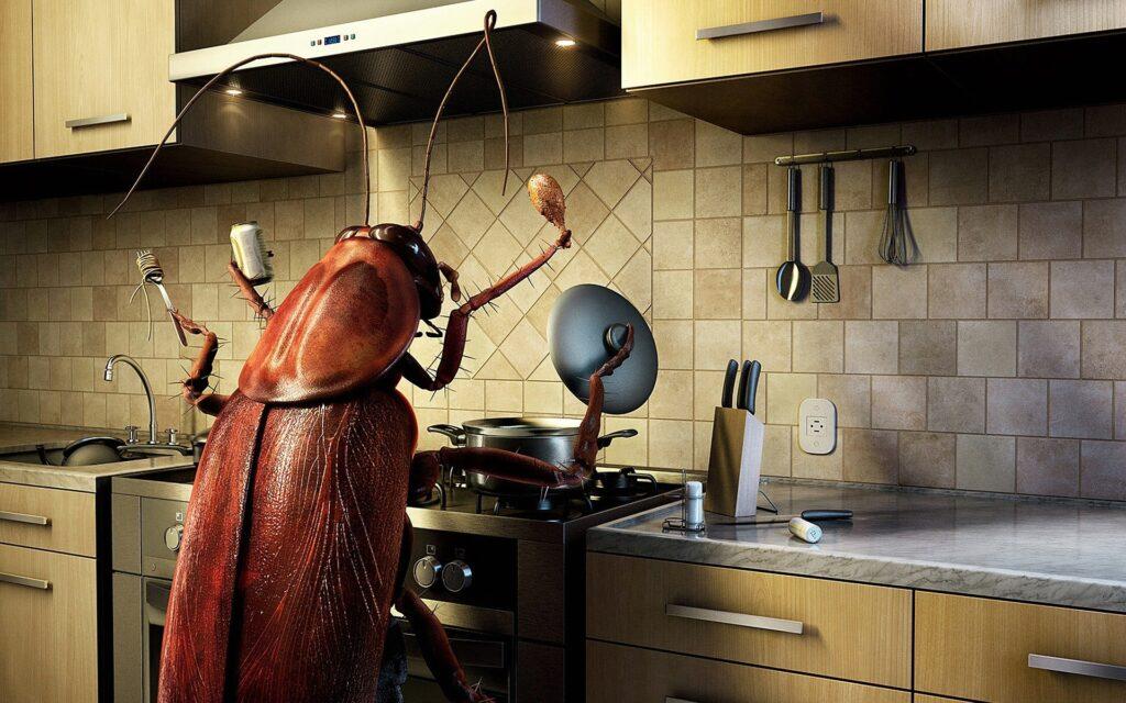 Тараканы на кухне DEZSESMOS.RU