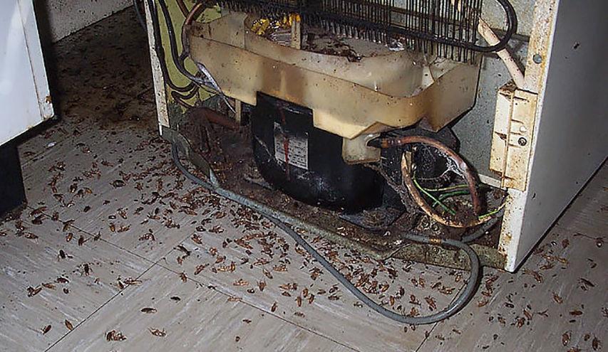 Уничтожение тараканов за холодильником DEZSESMOS.RU
